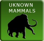 Unknown Mammals