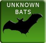 Unknown Bats