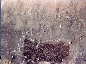 Fossil Human Footprint